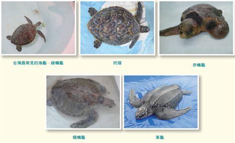 中華民國教育部版權所有© 2015 ministry of education, r.o.c. 海龜有流行疾病嗎-科技大觀園