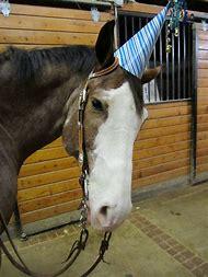 Horse Wearing Birthday Hat