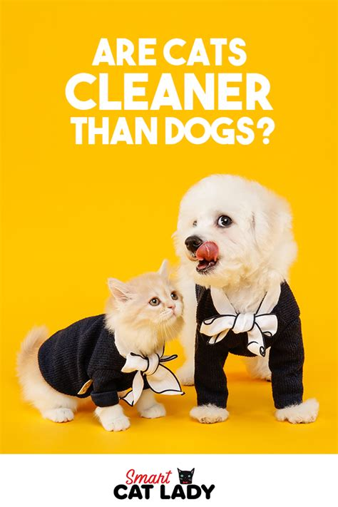 dogs cats than cleaner cat facts dog vs
