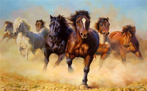 animals wild horses galloping hd wallpaper