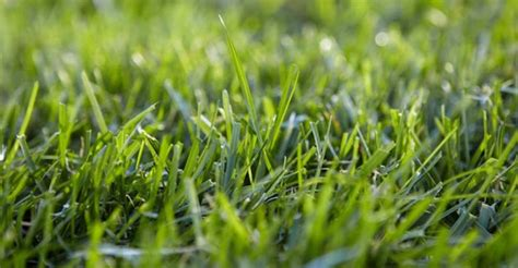 Lowes-grass Lawn