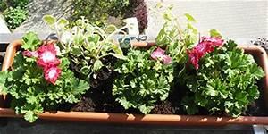 Hängepflanzen Für Balkonkästen : blumenk sten bepflanzen tipps zum nachmachen ~ Michelbontemps.com Haus und Dekorationen