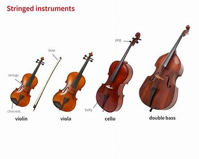 Bass Double Violin Notes Instrument Instruments Musical