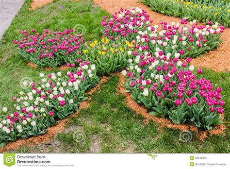 flowerbed of tulips in a flower shape stock photo image 52542396
