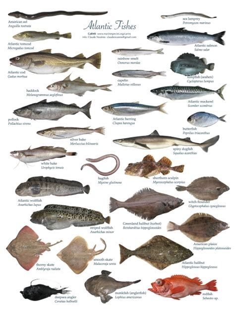 canadian register  marine species photogallery