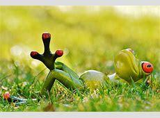 Kostenloses Foto Frosch, Wiese, Entspannt Kostenloses