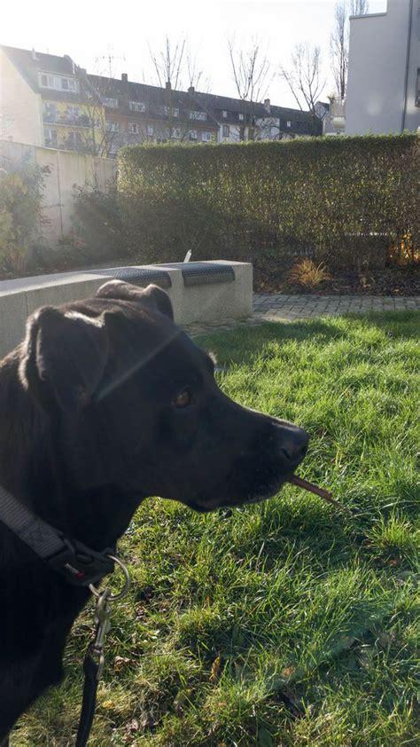 Schwarzer Hund Im Garten  Bilder Und Fotos (creative