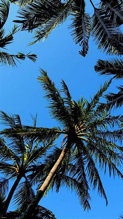 Palm Tree Trees Cool Wallpapers Backgrounds Galaxy