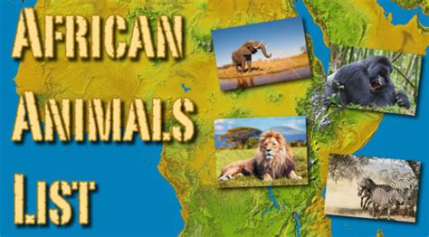 Animal Lists Archives Active Wild