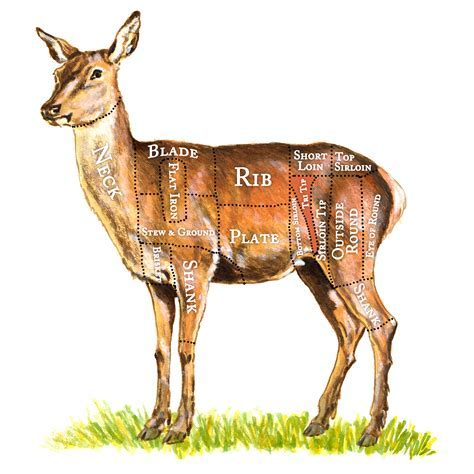 100% Grassfed Red Deer Venison Tri Tip Steak   Fowl & Game