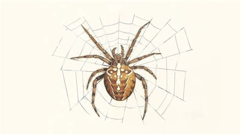 Eggs, Webs & Other Spider Facts
