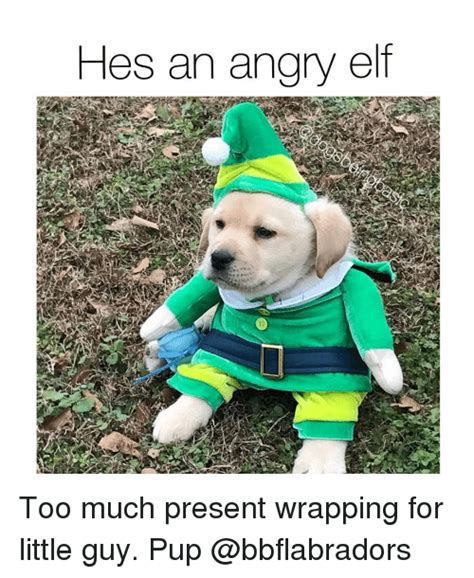 Angry Elf Meme - hes an angry elf too much present wrapping for little guy pup elf meme on sizzle