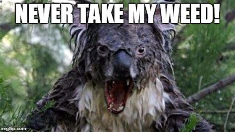 Angry Koala Meme - angry koala meme imgflip