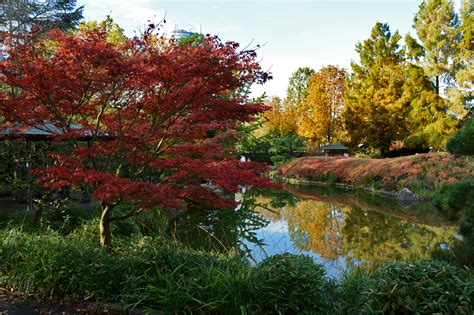 Japanischer Garten Bonn Rheinaue by Japanischer Garten In Der Bonner Rheinaue 01 11 2014