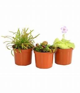 Miniteich Pflanzen Set : karnivoren pflanzen set dehner ~ Buech-reservation.com Haus und Dekorationen