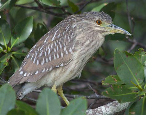Florida Birds Identification