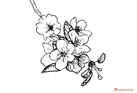 apple tree coloring pages downloadable  printable
