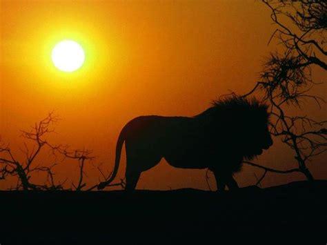 Animal Silhouette Wallpaper - animals sunset sun silhouette wallpapers hd