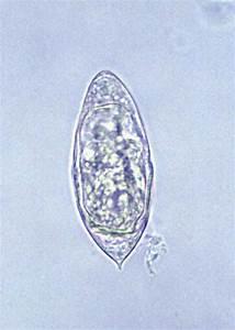 Animal Parasitology