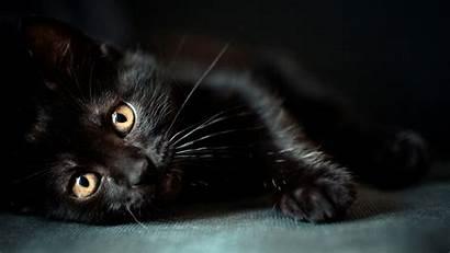 Cat Cats Wallpapers Desktop Background Animals Computer