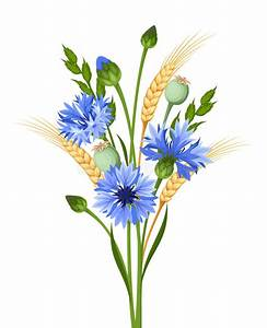 Bouquet Of Cornflowers And Wheat. Vector Illustration ...