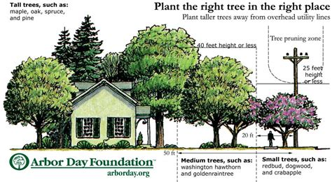 trees to plant to house foundation plant the right tree in the right place peco an exelon company