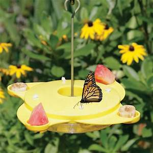 Price List For Cleaning Houses Duncraft Com Butterfly Feeder
