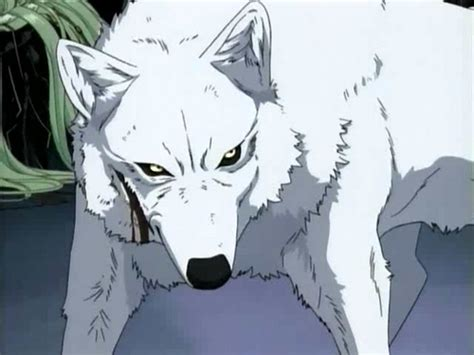 Wolfs Kiba Wallpaper by Wolf S Images Kiba Wallpaper And Background Photos