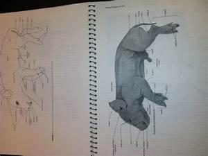 Fetal Pig Dissection  External Anatomy