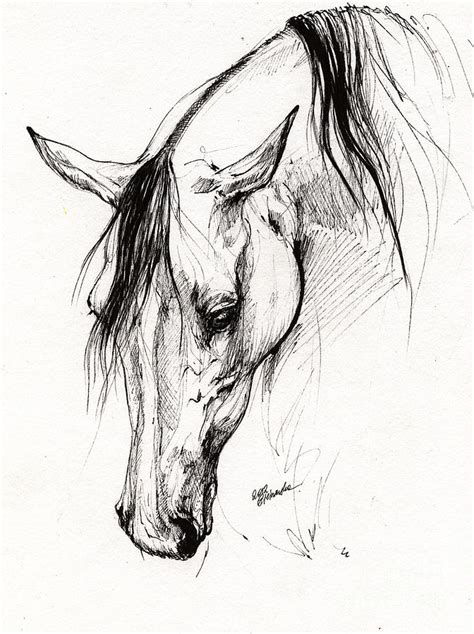 arabian horse ink drawing  drawing  angel ciesniarska