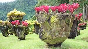 Fleur De Jardin. file fleur 3 jardin des plantes jpg wikimedia ...