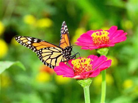 gambar kupu kupu indonesiadalamtulisan terbaru