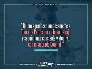 Quotes  Frases   Tierradeperros Guarder U00eda Canina  Hotel  Entrenamiento Para Perros  Veterinaria