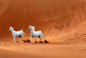 sprüche pferde pferde gb bilder für jappy 020 jpg