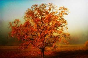 Fall, Foliage, Stock, Images
