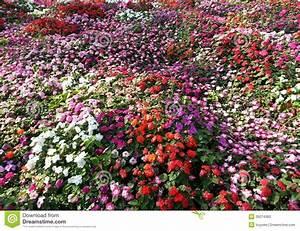 Tapis De Fleurs : impatiens fond de tapis de fleur image stock image du ~ Melissatoandfro.com Idées de Décoration