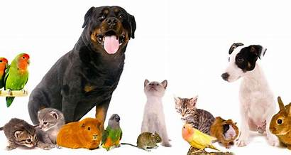 Pets Things Pet Care Animals Popular Breed