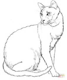 Realistic Cat Coloring Pages Printable