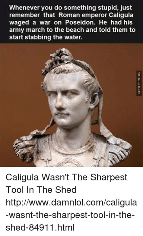 Sharpest Tool In The Shed Meme by 25 Best Memes About Caligula Caligula Memes
