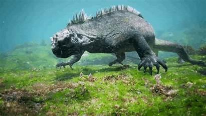 Lizard Monster Giant Swimming Ocean Animated Amazing