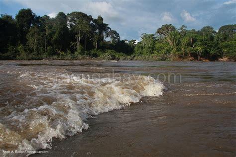 Amazon Slideshow: Rainforest river in Suriname