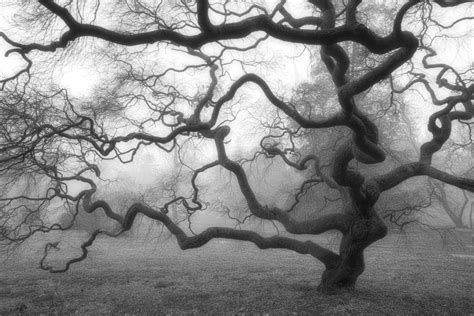 Nature Photography Winter Tree Black and White Photograph