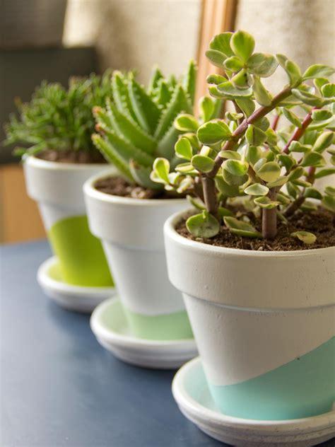Low Maintenance Plants For Dorm Rooms Hgtv