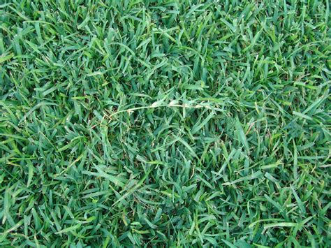 types of grasses the 3 most common grass types in jacksonville fl