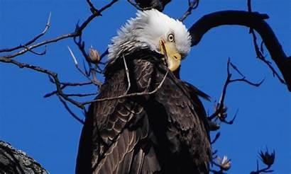 Eagle Beak Fish Flight Winter