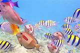 Wonderfully Different Types of Fish - This Will Amaze You