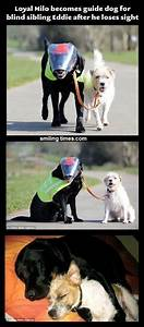 A guide dog for a blind dog. How beautiful is that! # ...