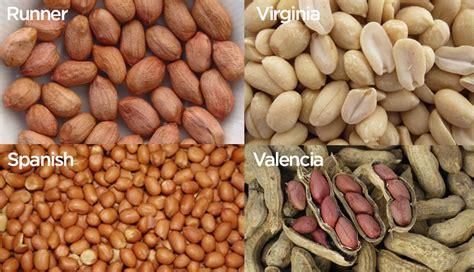 types of peanuts virginia carolinas peanut promotions