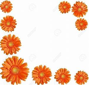 Orange Flower clipart white background - Pencil and in ...