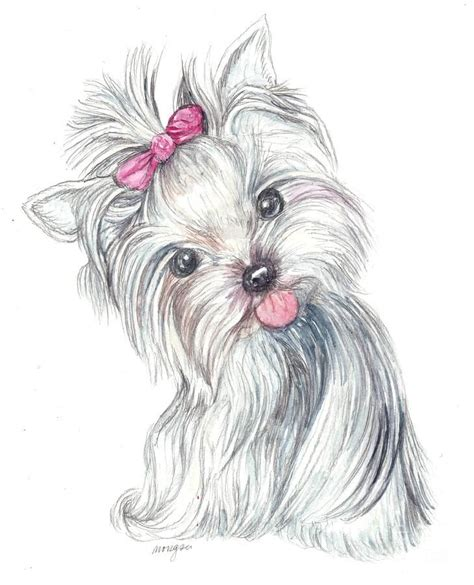 yorkie puppy  morgan fitzsimons dibujos de perros